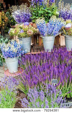 Flower-symphony In Blue
