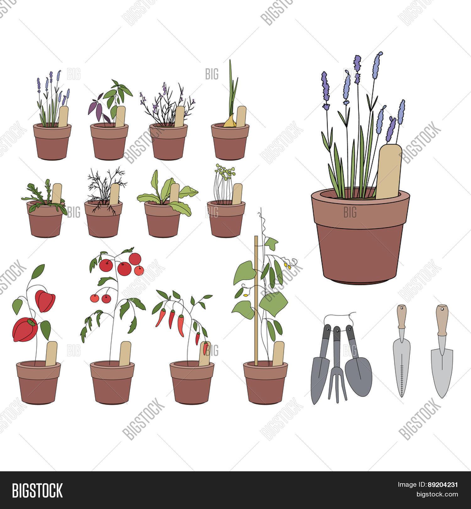 Flower Pots Herbs Vector Photo Free Trial Bigstock