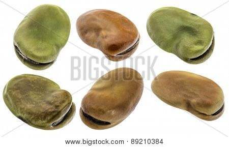 fava (broad) bean - six seeds isolated with clipping paths