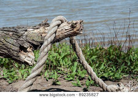 Nautical Rope & Branch