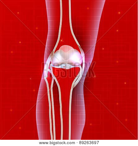 Normal Knee Joint Abstract Red Background