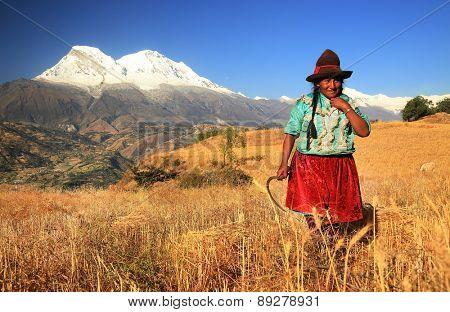 CORDILIERA NEGRA, PERU - AUGUST 23: Peruvian peasant woman harvesting the wheat, Peru, South America, August 23 2012