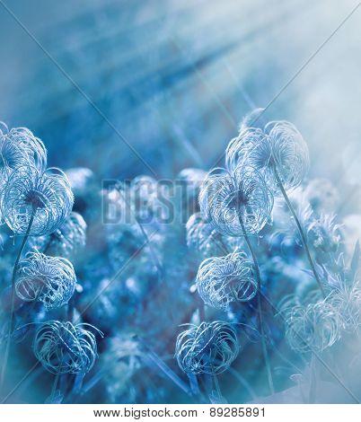 Fluffy flower - softness flower lit by sun rays