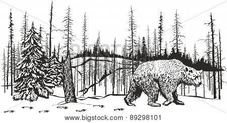 Bear left a den.