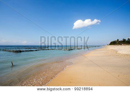 Plantations Of Seaweed On Dream Beach, Algae At Low Tide