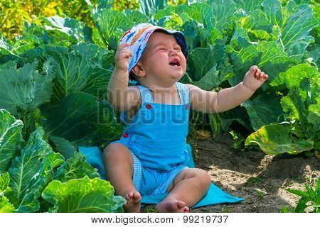 charming crying caucasian baby boy in cabbage bed poster
