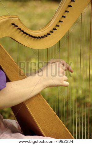 Harp 022