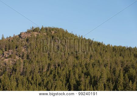 Forested Mountain Top