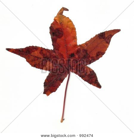 Mottled Fall Leaf