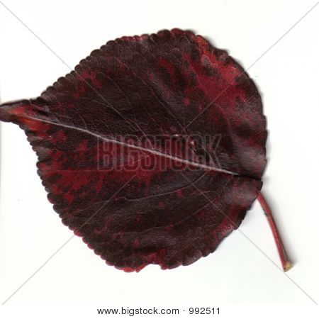 Red And Black Fall Leaf