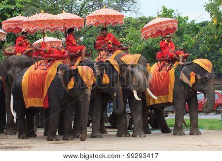 Ayuthaya Thailand-september 6 : Elephant Mahout Relaxing On Elephant Back