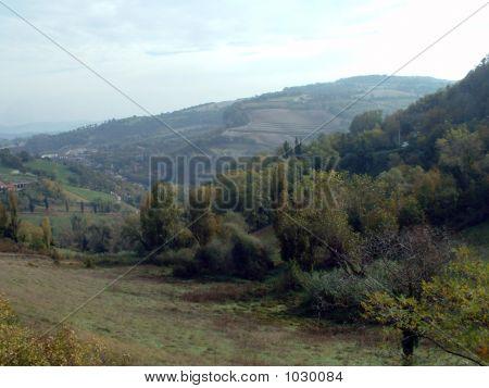 Urbino Meadow