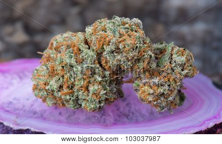 Conspiracy Kush Medicinal Medical Marijuana