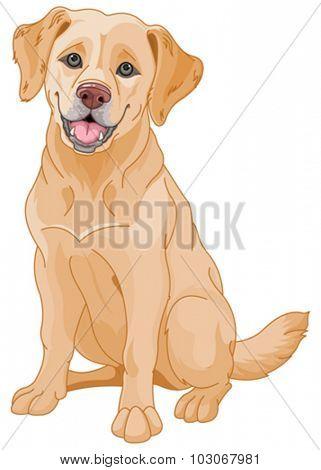 Illustration of cute Golden Retriever dog