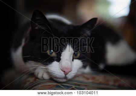 Lazy photogenic cat
