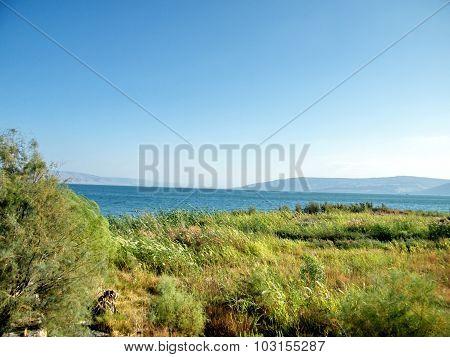 Galilee Shore Of Lake Kinneret Near Chapel Of The Primacy 2010