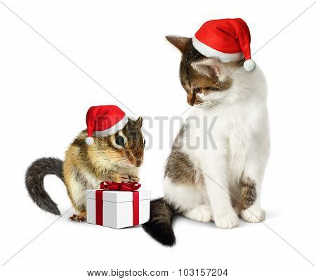 Funny Christmas Pet, Funny Squirrel And Cat With Santa Hat And Gift