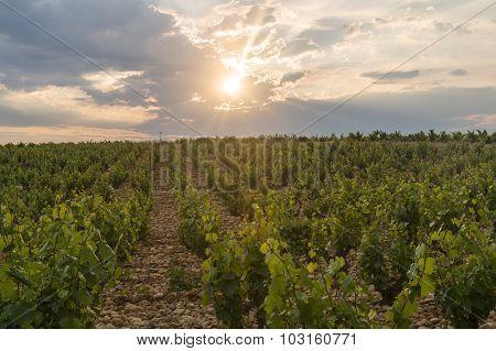 Landscape Near Orange (provence)