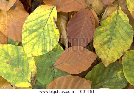 Background Of Fallen Leaves