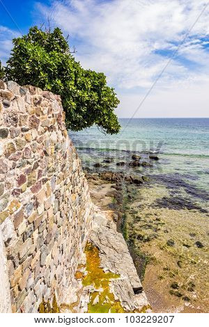 Tree On The Ancient Wall On The Seaside