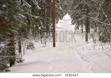 Winter Forest. Hill