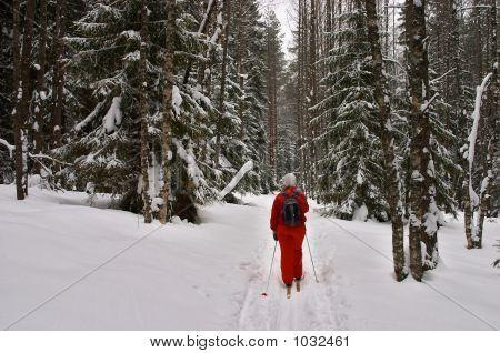 Winter Forest. Skier With Rucksack