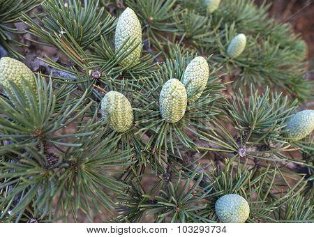Beautiful Cones