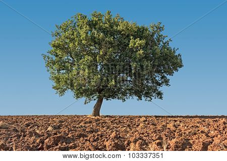 solitaire tree