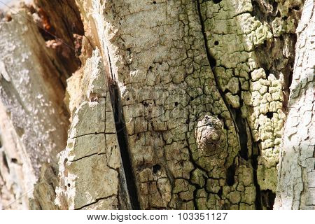 Dead Tree Closeup