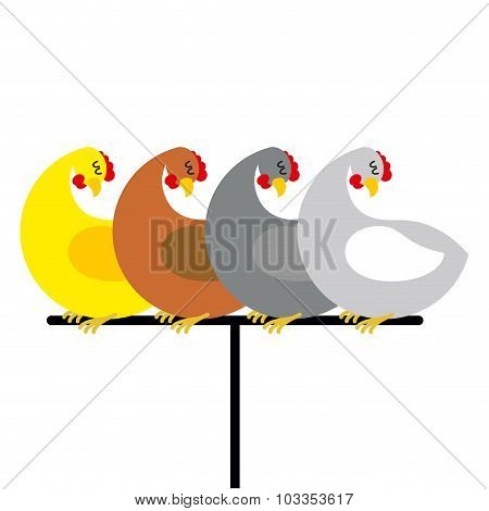 Chicken Sitting On Perch. Birds At Farm Are Sitting On Bird Perch