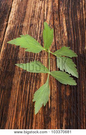 Lovage Herb.