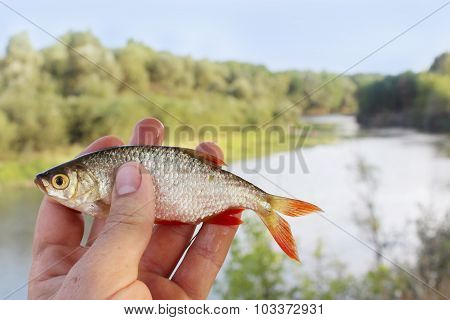 Rudd In The Hand