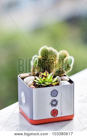 Plants In A Can