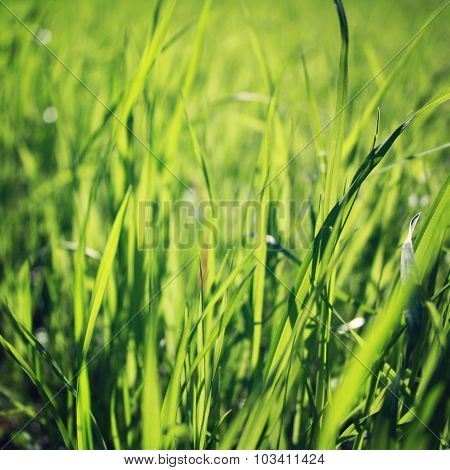 Spring Grass On The Field. Closeup. Vintage Photo.
