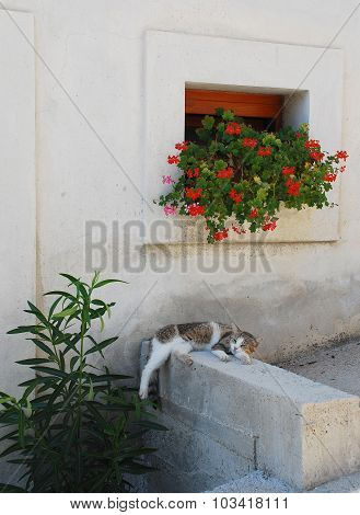 Street Cat In Pican
