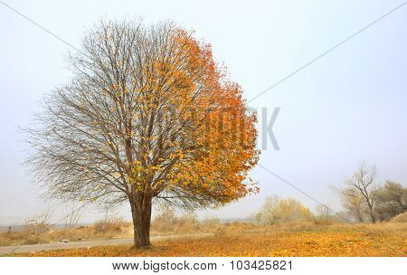 Solitary Single Tree