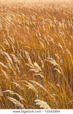 Autumn field grass