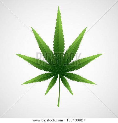 Cannabis marijuana hemp leaf. Vector illustration