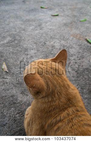 Close-up rear view of orange cat