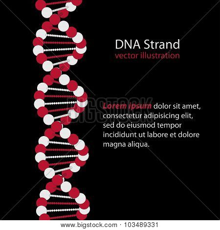 DNA Strand - Deoxyribonucleic acid - genetic code - vector illustration poster