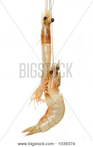 fresh shrimps over a white background . poster