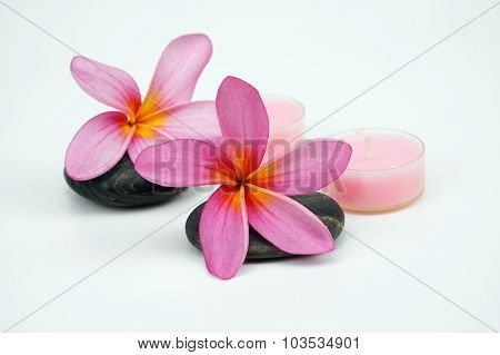 Pink Frangipani flowers on pebble with pink candle on white background