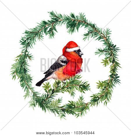 New year wreath - fir and bullfinch bird in red hat. Watercolor