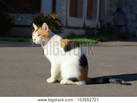 Cat is sitting