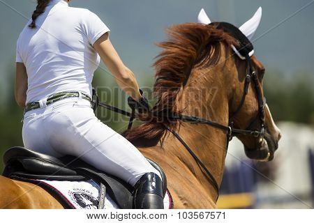 Close Up Of The Rider On A Horse During Competition Matches Riding Round Obstacles