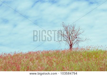 Dry Tree On The Field And Sky, Vintage Toning