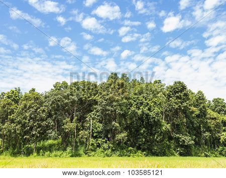 Beautiful Jungle And Beautiful Sky