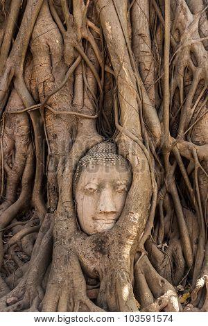 Tree Buddha In Ayutthaya