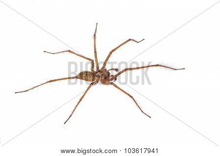 Close-up, Macro Photo Of A Spider