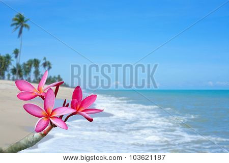 Plumeria Flowers On The Beach